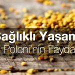 Sağlıklı Yaşam: Arı Poleni'nin Faydaları